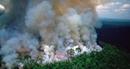 """Sao quốc tế kêu gọi bảo vệ """"Lá phổi xanh Trái Đất"""" đang bốc cháy"""