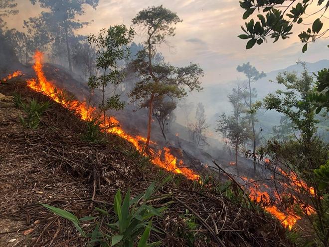 150 chiến sĩ Công an xông vào lửa chữa cháy trên đỉnh núi Phú Sơn - Ảnh minh hoạ 3