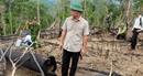 Ai chủ mưu phía sau các vụ phá rừng tại Quảng Nam?