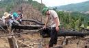 Khởi tố đối tượng hủy hoại rừng tại Quảng Nam