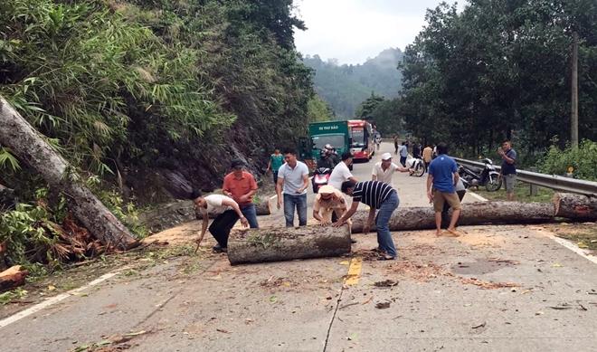 CSGT dọn dẹp cây cổ thụ đổ chắn ngang đường Hồ Chí Minh - Ảnh minh hoạ 2