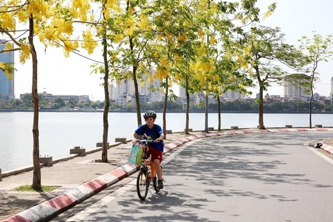 Những chùm hoa vàng rực rủ xuống đong đưa trong gió khiến con phố Hà Nội trở lên thơ mộng trong ngày hè.