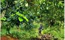 Tỉnh Đắk Nông quáng bá thu hút đầu tư cho sản phẩm nông sản  thế mạnh