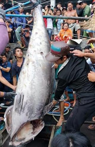 Sướng chuyện câu cá ngừ đại dương ở Hòn Rớ - Ảnh 2.