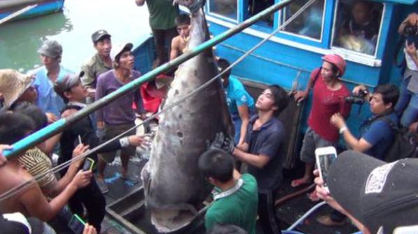 Sướng chuyện câu cá ngừ đại dương ở Hòn Rớ - Ảnh 3.