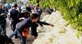 Người Hà Nội chung tay 'giải cứu' củ cải Mê Linh