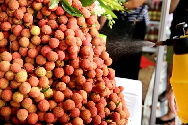 Vải Thanh Hà-Hải Dương từ lâu đã nổi tiếng vỏ mỏng, cùi dày, vị thanh mát, hương thơm đặc trưng.