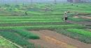Tiền Giang được chuyển đổi hơn 11.000ha đất nông nghiệp