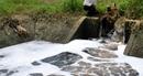 Doanh nghiệp chế biến hải sản xả thải gây ô nhiễm môi trường