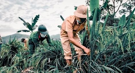 Ngày nghỉ lễ bận rộn giúp dân cứu lúa