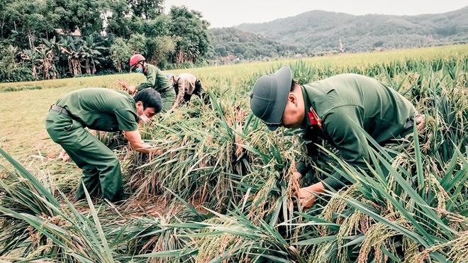 Ngày nghỉ lễ bận rộn giúp dân cứu lúa - Ảnh minh hoạ 7