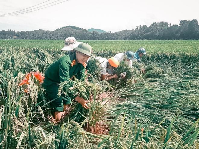 Ngày nghỉ lễ bận rộn giúp dân cứu lúa - Ảnh minh hoạ 2