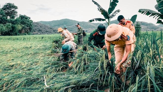 Ngày nghỉ lễ bận rộn giúp dân cứu lúa - Ảnh minh hoạ 4