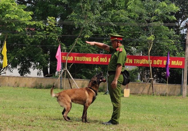 283 chó nghiệp vụ tranh tài khu vực phía Bắc - Ảnh minh hoạ 8