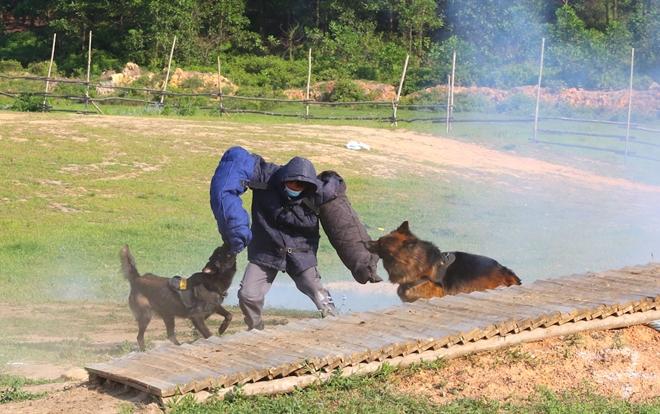 CSCĐ sử dụng chó nghiệp vụ trình diễn kỹ chiến thuật trấn áp tội phạm - Ảnh minh hoạ 11