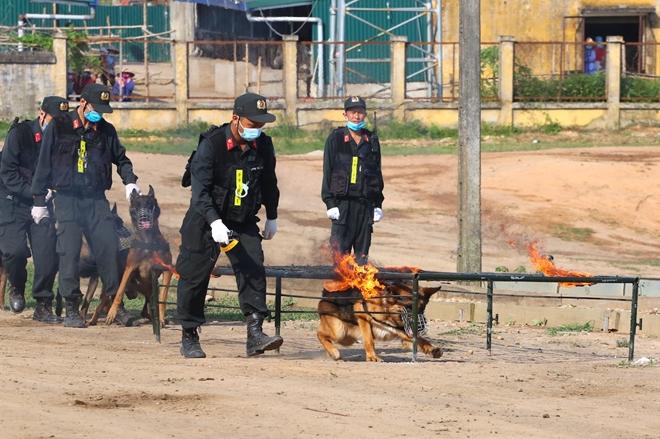 CSCĐ sử dụng chó nghiệp vụ trình diễn kỹ chiến thuật trấn áp tội phạm - Ảnh minh hoạ 8
