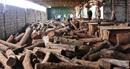 Phát hiện kho gỗ lậu hơn 10m3