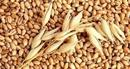 Tìm cách tháo gỡ khó khăn cho doanh nghiệp nhập khẩu lúa mì