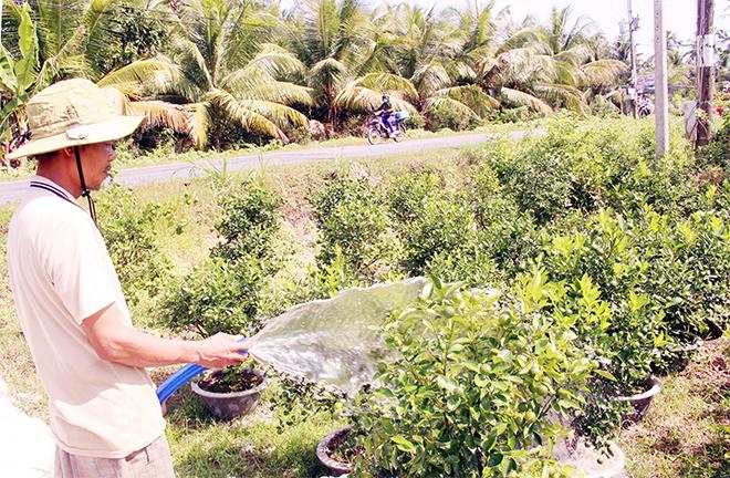 Công an huyện nỗ lực ngăn chặn nạn trộm cây giống, hoa kiểng