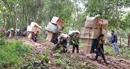 """Đề nghị xác minh tình trạng """"cõng hàng lậu"""" tại Lạng Sơn"""