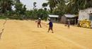 Nông dân miền Tây gặp khó trong vụ đông xuân