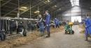 Cô Gái Hà Lan hé lộ quy trình sản xuất với bộ 7 nguyên tắc vàng về chất lượng