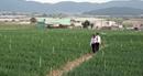 Agribank tích cực hỗ trợ người nông dân trồng hồ tiêu