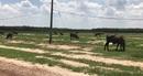 Dự án nhà ở Sài Gòn Land 2: Bán đất chăn thả gia súc?