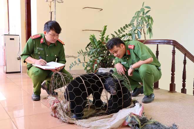 Biểu dương tập thể, cá nhân đã phát hiện 2 cá thể gấu ngựa đang được mua bán trái phép