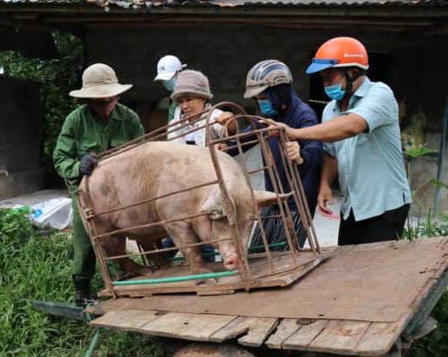 Tấm lòng người dân miền Trung hướng về TP Hồ Chí Minh - Ảnh minh hoạ 2