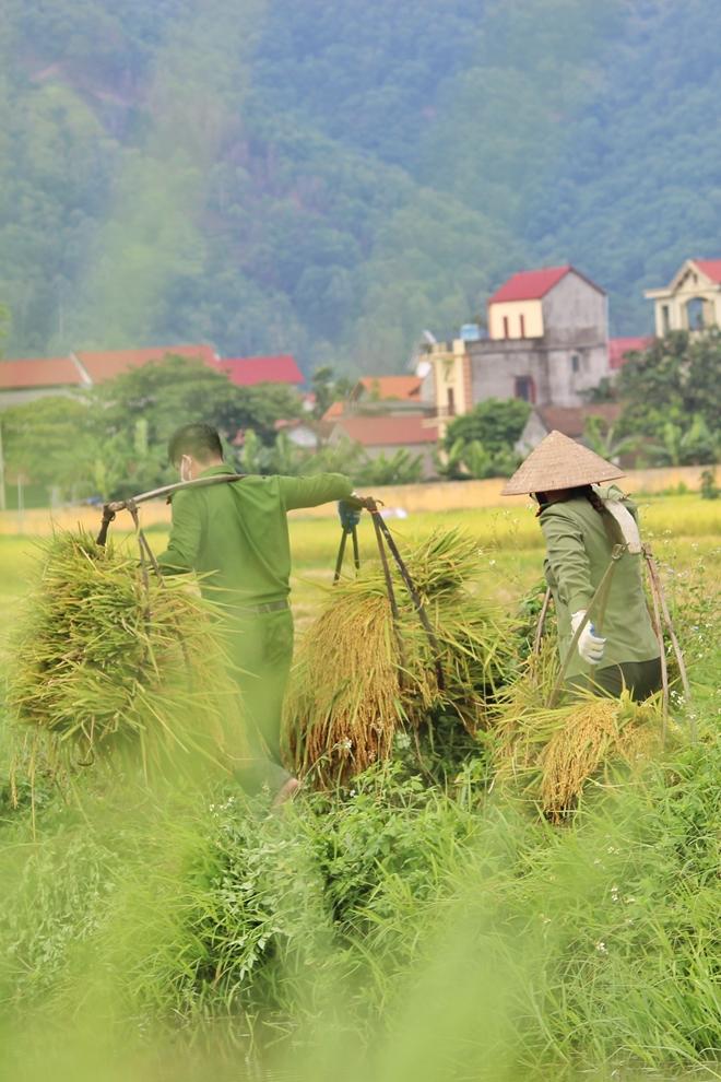 Công an Bắc Giang sau truy vết F0 lại gặt lúa giúp dân - Ảnh minh hoạ 3