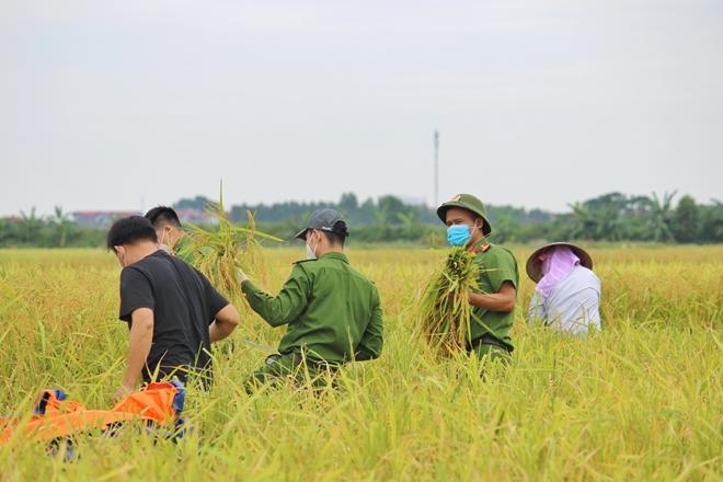 Công an Bắc Giang sau truy vết F0 lại gặt lúa giúp dân - Ảnh minh hoạ 4