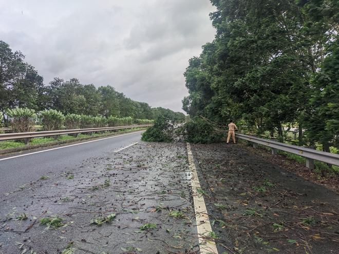 CSGT xử lý nhiều điểm cây đổ trên cao tốc Pháp Vân - Ninh Bình - Ảnh minh hoạ 2