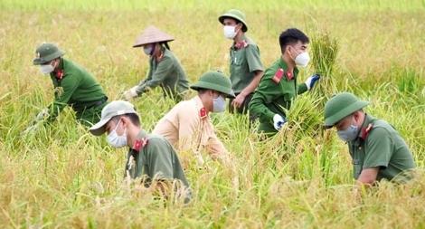 Công an Bắc Giang sau truy vết F0 lại gặt lúa giúp dân
