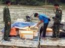 1 tấn cá đối nhập lậu bằng mảng xốp qua sông biên giới