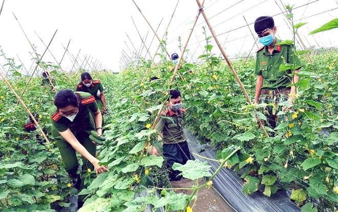 Công an An Giang gửi tặng TP Hồ Chí Minh 30 tấn nông sản - Ảnh minh hoạ 2