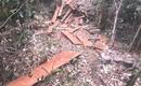 Vụ phát hiện 2 vụ phá rừng quy mô lớn trong dịp Tết: Bắt tạm giam một đối tượng