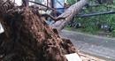 Hàng loạt cây xanh, cột đèn ở Cần Thơ bị ngã do mưa lớn