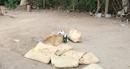 Nam thanh niên tử vong cách điểm đá gà 100m